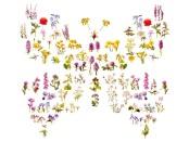 Butterfly of wild flowers