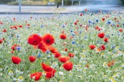 Wild flowers on a roundabout