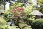 The Japanese garden, Tatton Park, Cheshire