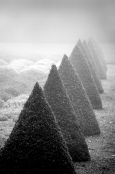 Pointed Topiary in Winter