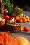RHS Garden Hyde Hall pumpkins