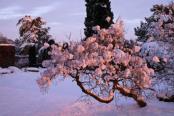Snow blossom