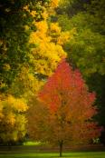 tammymarlar-pgpa-autumntrees-0170