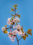 tammymarlar-pgpa-blossom-4082
