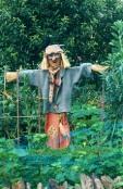 The Barnsley Scarecrow