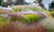 The Sea of Grasses