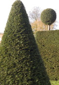 Topiary at Erddig