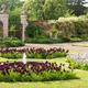 Irises at Doddington