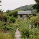 Lush summer kitchen garden