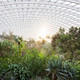 Inside the Great Glasshouse, National Botanic Garden of Wales