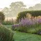 Early morning perennial border with Lythrum salicaria 'Blush'
