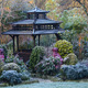 Early morning sun and frost in Japanese garden
