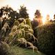 Pampas in September sun