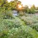 Wildflower Garden in Late Summer