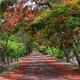 Avenue of flame trees